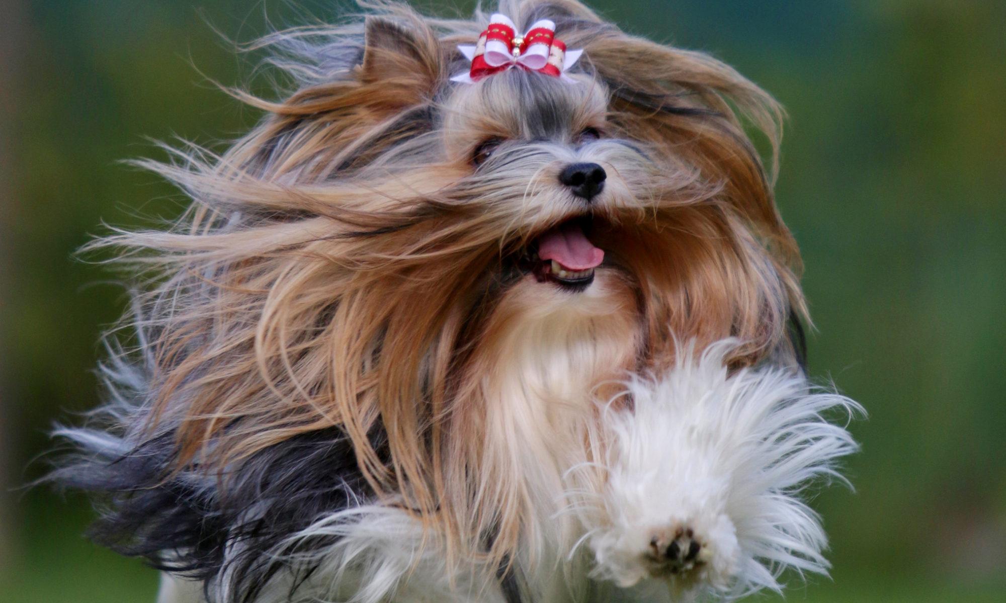 Klub přátel malého psa